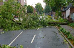 pohon tumbang di depok