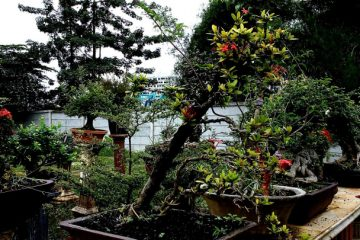 kampung bonsai depok
